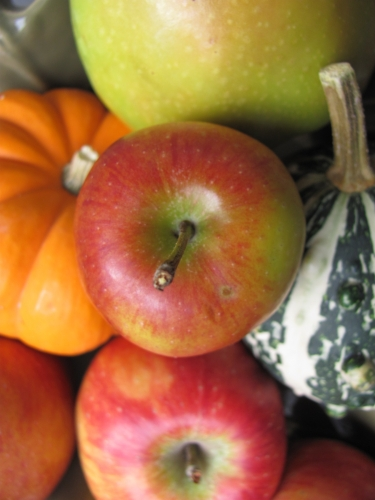 fall apples,apple,gourds