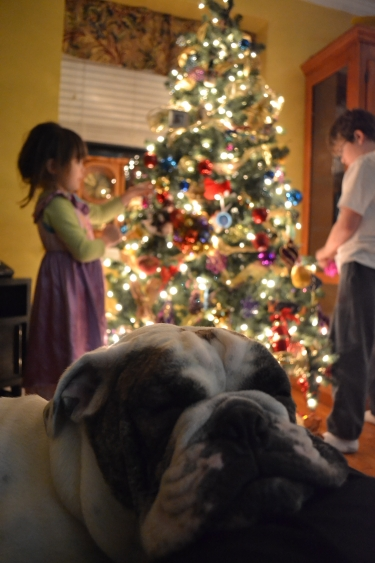 english bull dog,bulldog,christmas dog