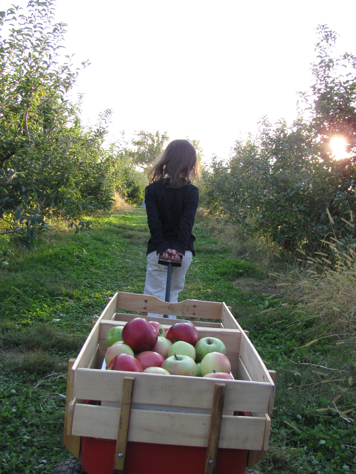 8 reasons to spend lovely day at linvilla orchards blog for Where can i go apple picking near me